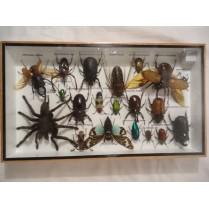 Ramme med forskellige insekter - 1
