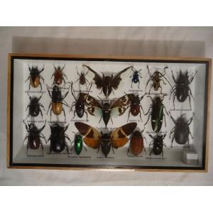 Ramme med forskellige insekter - 2